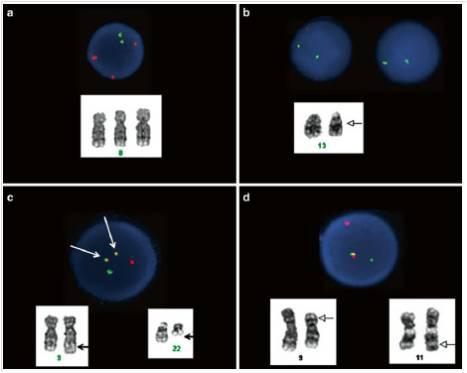 細胞遺傳學於癌症上的應用-3