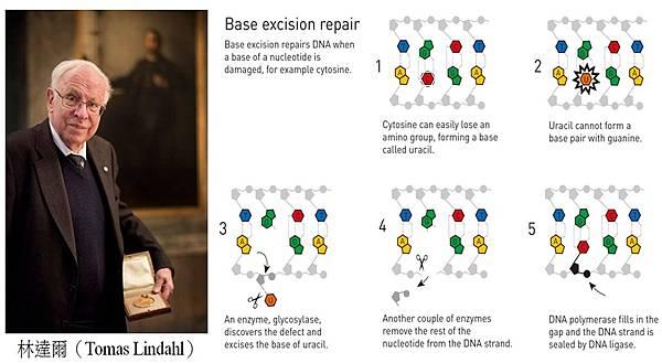 2015諾貝爾化學獎 林達爾