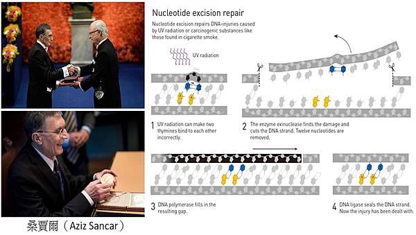 2015諾貝爾化學獎 桑賈爾