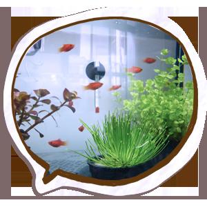 魚兒乾淨的家.png