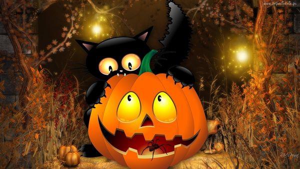 185014_dynia_pajak_kot_halloween