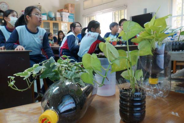植物結合寶特瓶