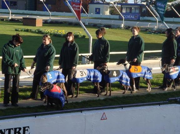 學校和外面體育場舉辦的賽狗活動