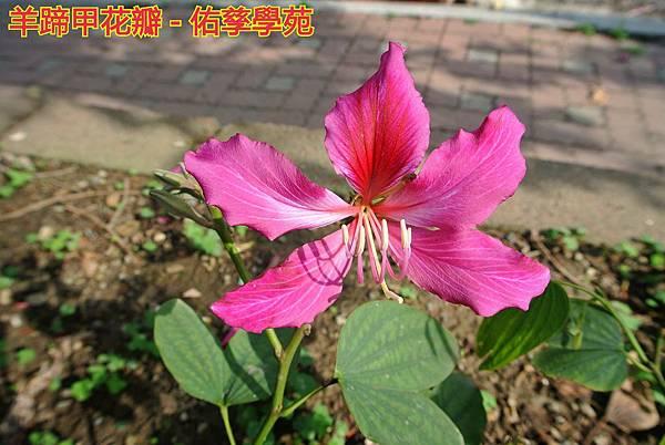 db2015-04-19-01-41-23_deco.jpg