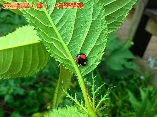 bg2015-04-09-01-43-41_deco.jpg