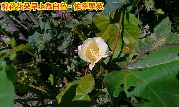 15-10-15-21-27-14-220_deco.jpg