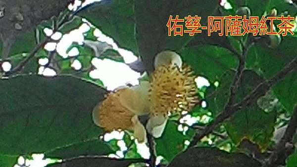 15-11-11-09-42-21-734_deco.jpg