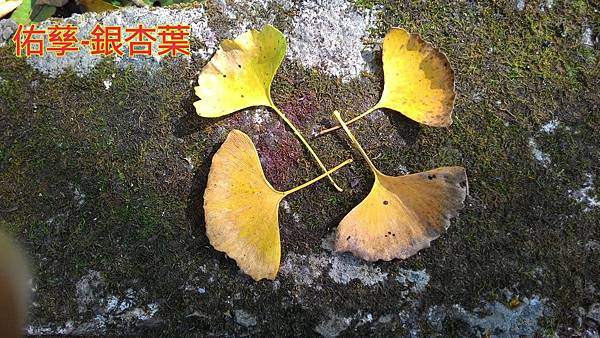 15-11-11-10-34-43-638_deco.jpg