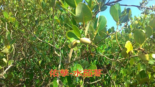 15-11-20-10-13-35-949_deco.jpg