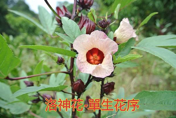16-04-02-23-09-41-566_deco.jpg