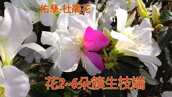 16-04-03-15-57-17-316_deco.jpg