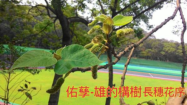 16-04-03-15-48-47-048_deco.jpg