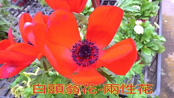 16-04-04-18-03-55-658_deco.jpg
