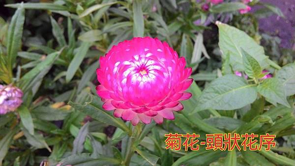 16-04-04-18-15-38-348_deco.jpg
