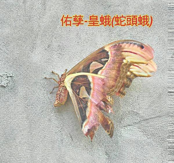 16-05-01-10-51-07-270_deco_1.jpg