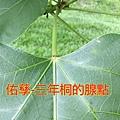 16-05-04-22-56-39-739_deco.jpg