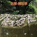 16-05-04-23-02-04-401_deco.jpg