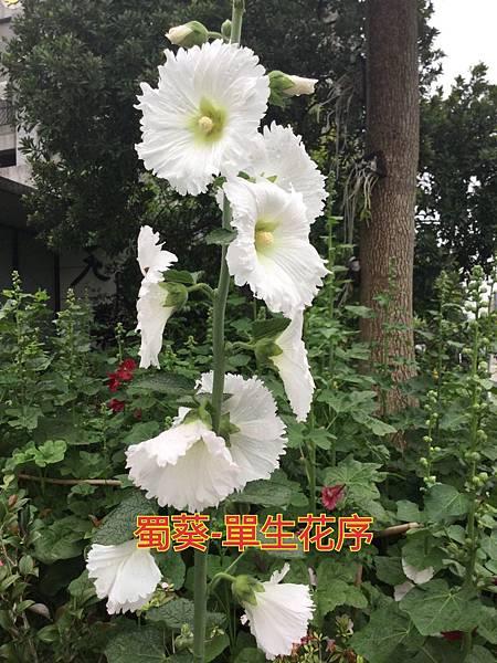 16-05-28-21-49-35-354_deco.jpg