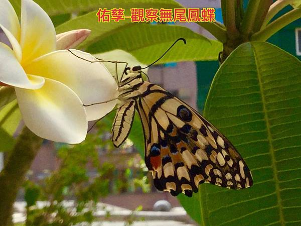 IMG_3605.jpg