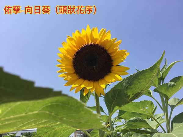 IMG_3853.jpg