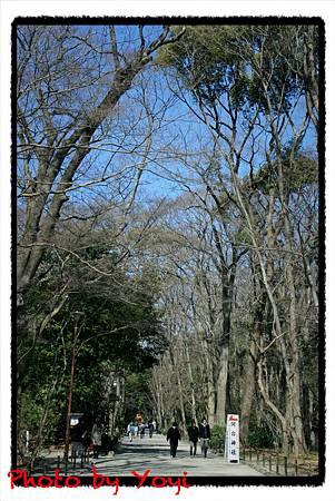 2011.02.26下鴨神社03.JPG