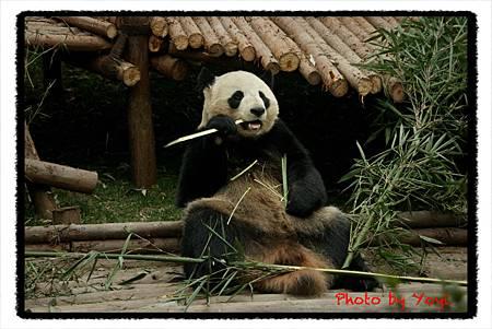2012.02.26熊貓基地09