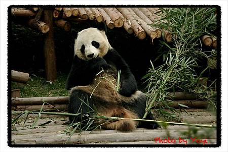 2012.02.26熊貓基地10