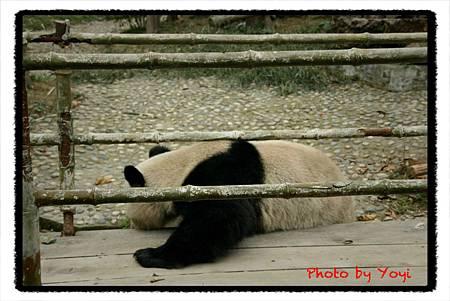 2012.02.26熊貓基地12