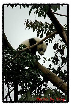 2012.02.26熊貓基地19