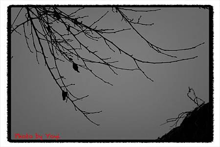 2012.02.26熊貓基地20
