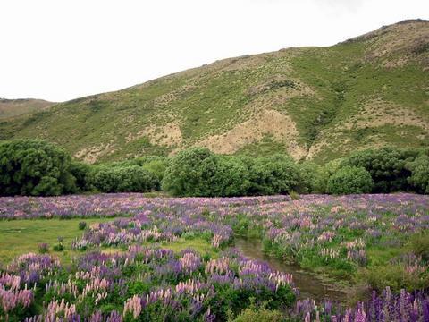 南島滿地的野花