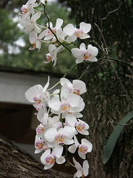 種在樹上的蘭花
