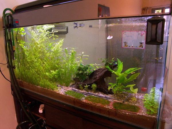 凱力家的寶貝魚缸1