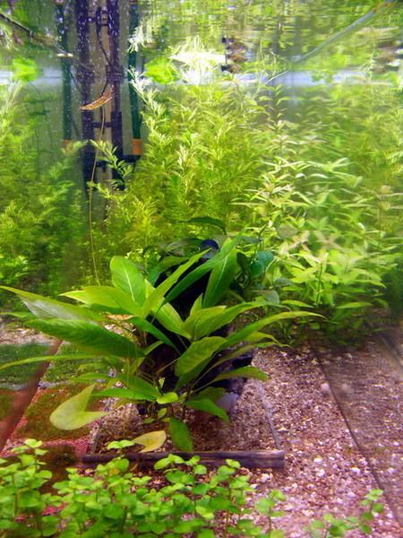 凱力家的寶貝魚缸2