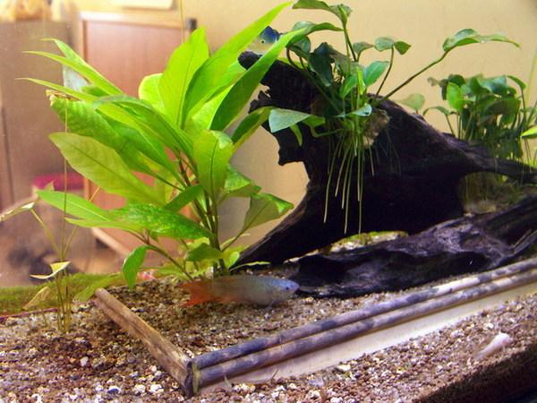 凱力家的寶貝魚缸3
