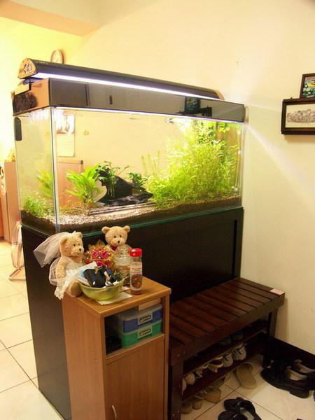 凱力家的寶貝魚缸4