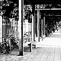 a_P5290081.jpg
