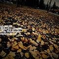 p_0922_7D_IMG_0122_LOMO