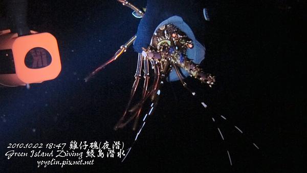 雞仔礁夜潛 10/02 (4) p_IMG_3512.jpg