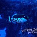 20101002 (1) 鋼鐵礁 p_IMG_3367.jpg