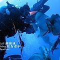 20101002 (1) 鋼鐵礁 p_IMG_3360.jpg