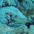 20101001 (2) 六米礁 p_IMG_3303.jpg