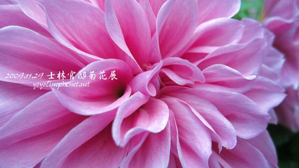 p_IMG_0261.jpg