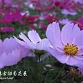 p_IMG_0273.jpg