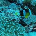 20101001 (2) 六米礁 p_IMG_3324.jpg