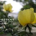 p_IMG_1620.jpg
