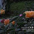 p_IMG_1660.jpg