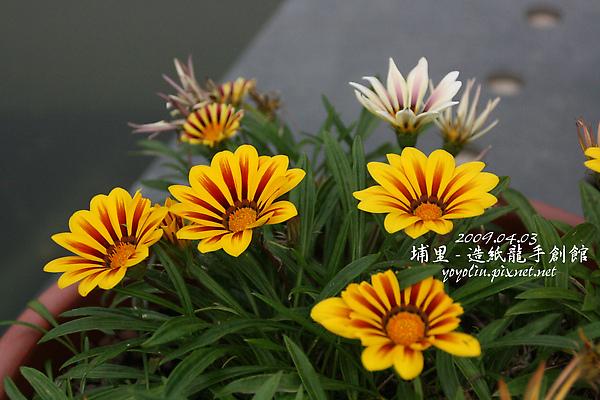 p_IMG_0121.jpg