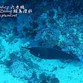 20101001 (2) 六米礁 p_IMG_3294.jpg