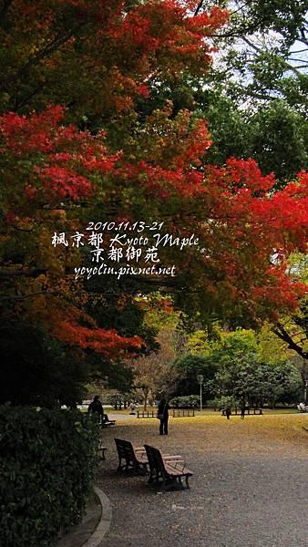 p_IMG_4443.jpg